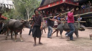 sulawesi adasi gezisi 2011 31
