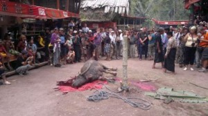 sulawesi adasi gezisi 2011 32
