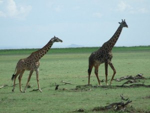 kenya-tanzanya 2009 01