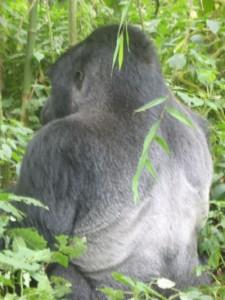 uganda-kongo-ruanda gezisi 2010 03