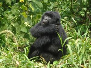 uganda-kongo-ruanda gezisi 2010 07