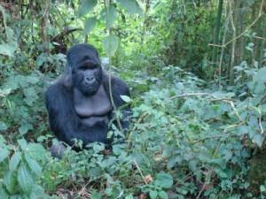 uganda-kongo-ruanda gezisi 2010 11