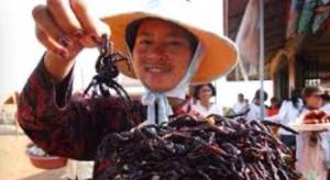 tarantula-kambocya
